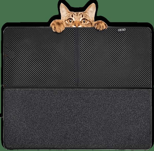 (B.GUD) CAT & CLEAN